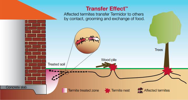 Termidor_Termite_Control
