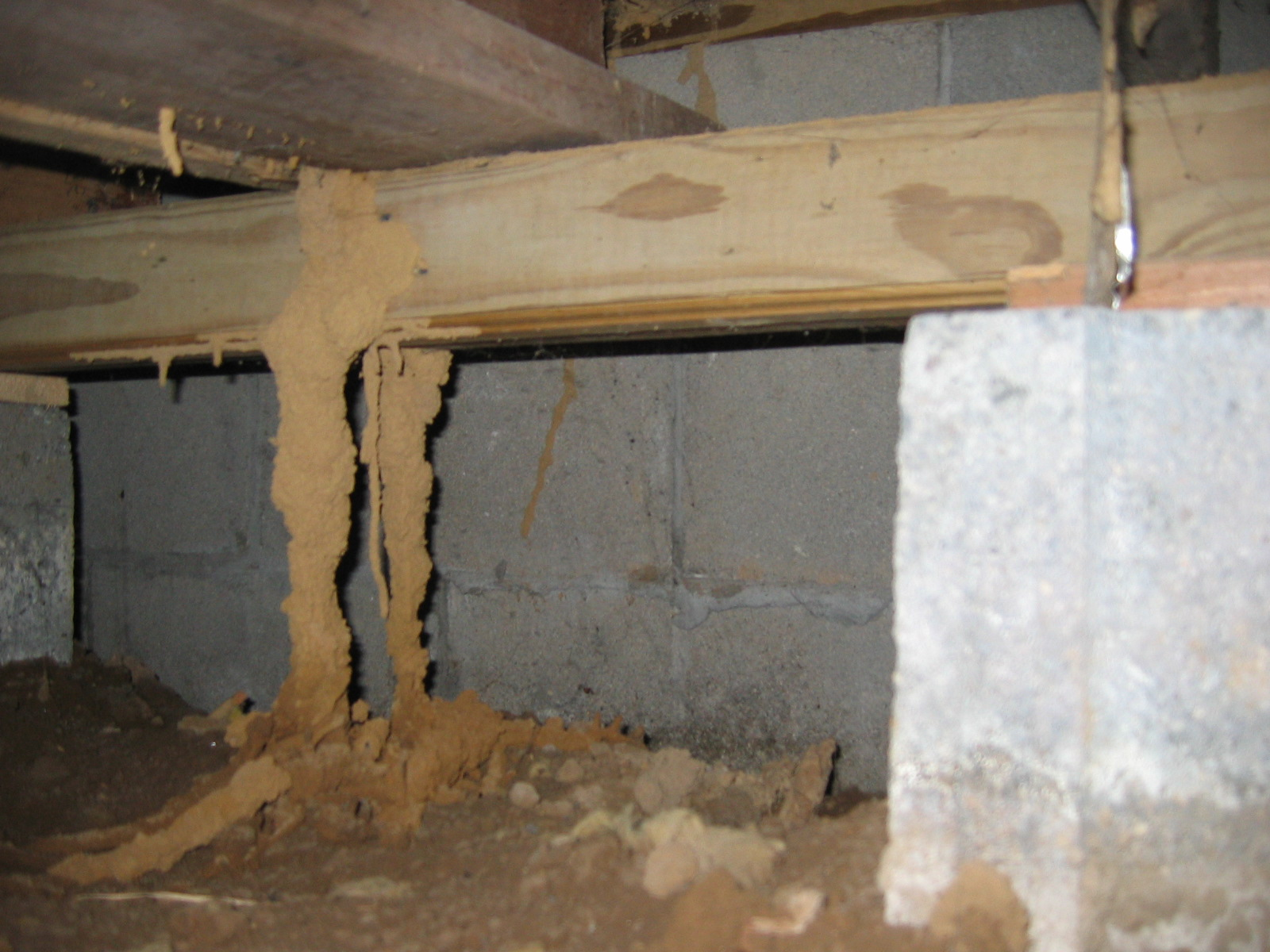 Termite Control Services Service Plus Pest Control